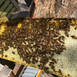 Our Amazing Bees