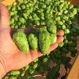 The Best Father's Day Gift Ever, Hops!!