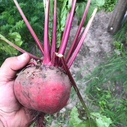 My New Found Relationship with Beets