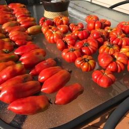 Homestead Harvesting, When the Real Work Begins